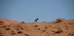 Oryx in the Namib